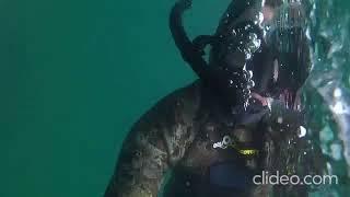 «Пришла поздороваться»: дайвер показал видео встречи на глубине у Русского острова