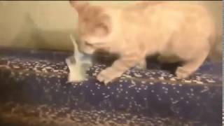 Stary filmik o zabawnych , śmieszynych kotach