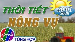 Thời tiết nông vụ 18h55 (20/01/2020)