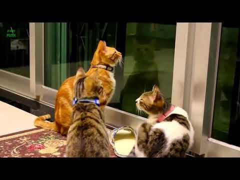 Funny Cats and Kittens Meowing Compilation HD
