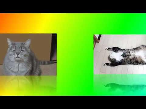 Приколы с котами,простите знаю что не смешно но, маленькие дети засмеются. //Карина КСЮША и Даша//☆☆