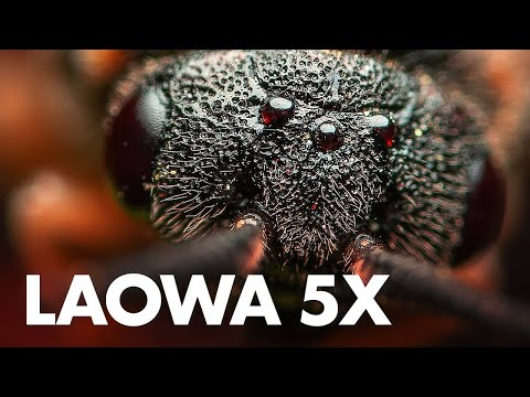 laowa-25mm-f/2.8-2.5-5x-ultra-macro-lens-review-with-sample-photos