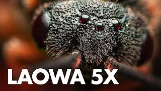 Laowa 25mm f/2.8 2.5-5x Ultra Macro Lens Review with Sample Photos