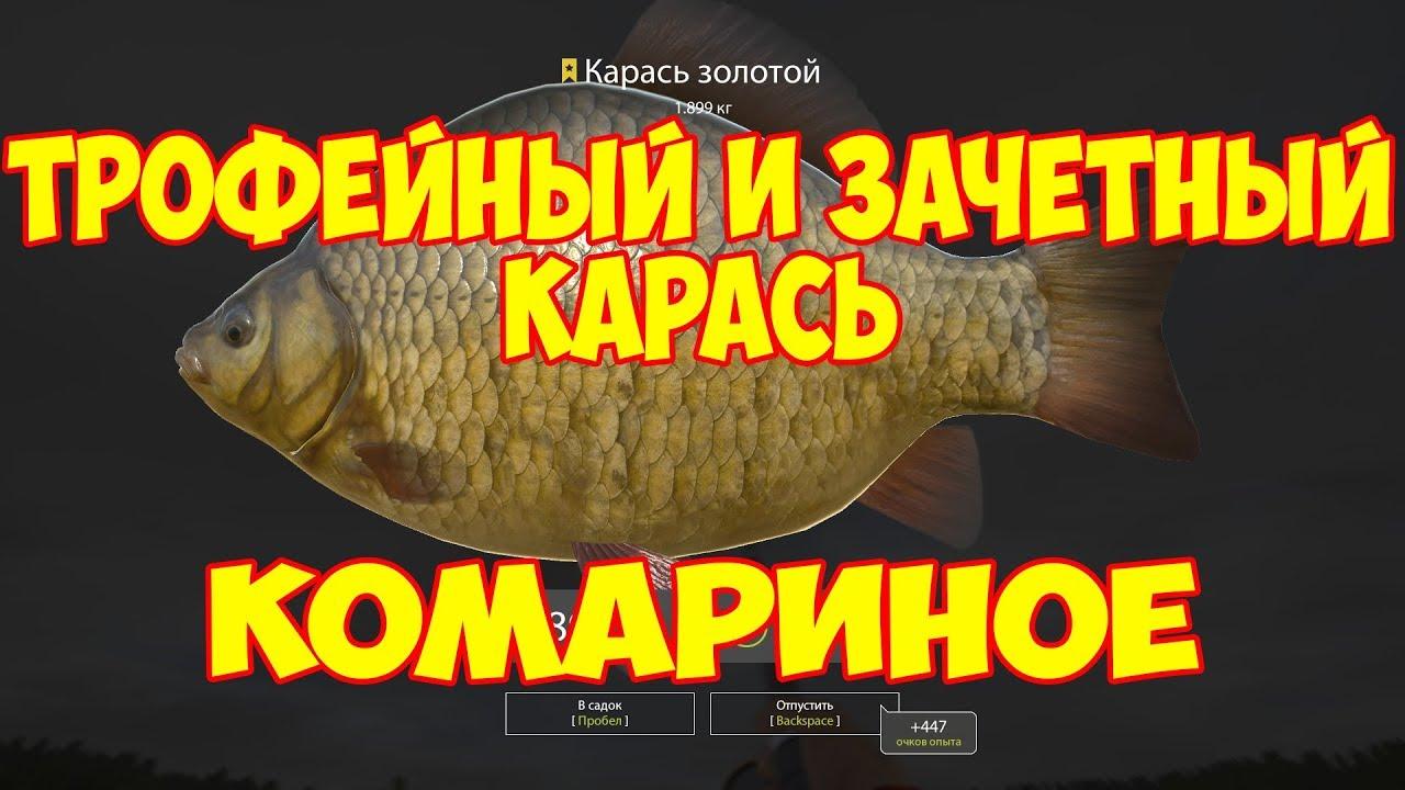 Русская рыбалка 4 гайд для новичка по ловле карася