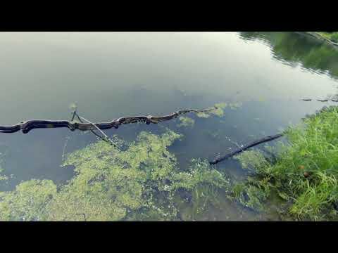 Skokie Lagoon Fishing