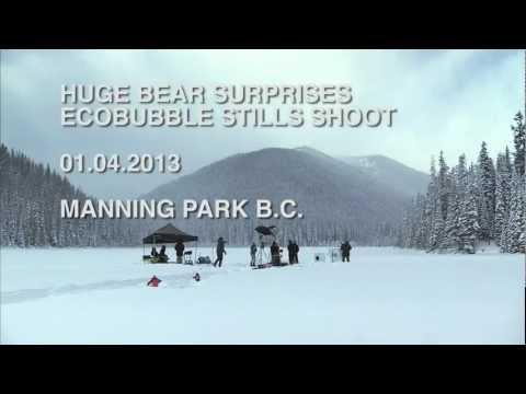 Bear Surprises Samsung Crew