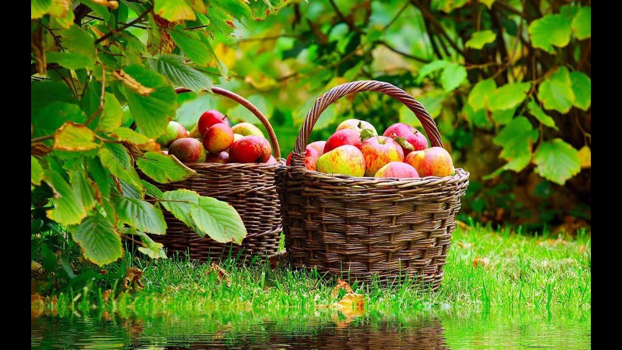هل تعلم فوائد التفاح على الريق