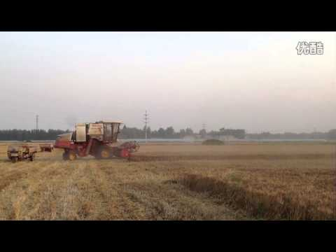 China Henan province: Foton lovol GE50 Wheat harvester in working