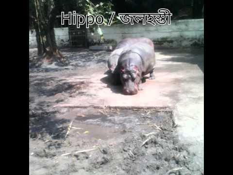 Dhaka Zoo in Bangladesh | Tour
