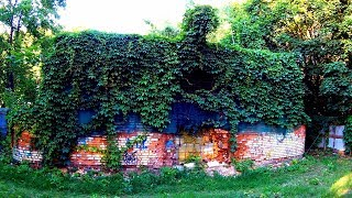 Футаж Заброшенный Дом Покрытый Плющом. Заросший Дом. Футаж Плющ на Стенах. Футажи для видеомонтажа