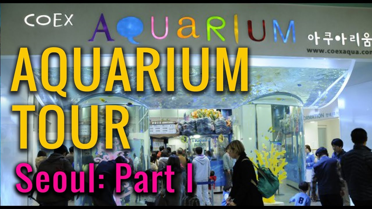 Freshwater fish korea - Coex Aquarium South Korea Pt 2 Freshwater Mp4
