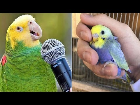 Baby Animals 🔴 Funny Parrots and Cute Birds Compilation (2020) Loros Adorables Recopilación #2