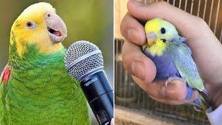 Baby Animals 🔴 Funny Parrots and Cute Birds Compilation (2020) Loros Adorables Recopilación #2