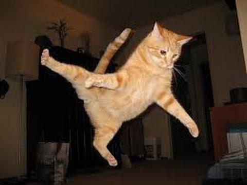 Funny Cats Jump Fail October 2014