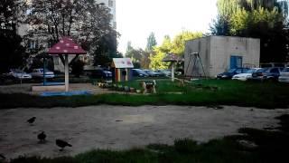 Собаки окупували двір на Кондратьєва у Сумах