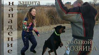 Неожиданное нападение. Реакция собаки. Доберман, защита хозяина. Doberman defends the owner