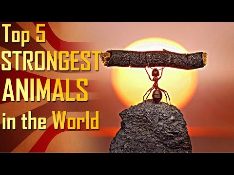 Top 5 Strongest Animals in the World