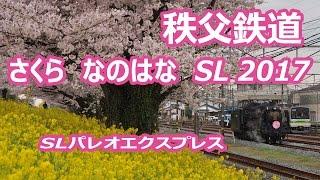 秩父鉄道、桜 菜の花 SLパレオエクスプレス 2017