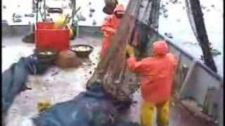 Pesca de camarón
