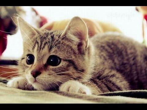 Анимации на телефон. Кошки. 240x320. Картинки кошек. Скачать обои.