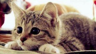 Приколы скачать Сборник приколов Приколы про кошек