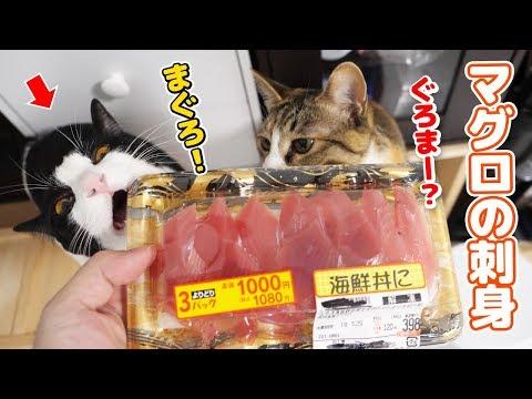 猫が生まれて初めてマグロの刺身を食べた時の反応w
