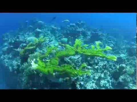 Jamaica Dive Montego Bay RIU