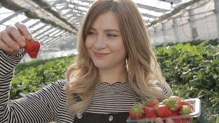 A Day on a Japanese Strawberry Farm thumbnail