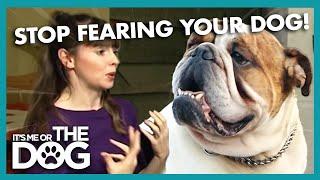 How To Keep Calm Around An Aggressive Dog