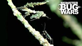 Moss Mantis Vs Jungle Tiger Beetle | MONSTER BUG WARS