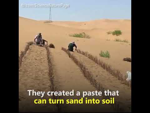 Desert Farming at China