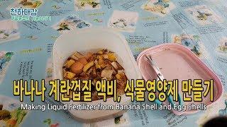 바나나껍질 계란껍질로 액비 식물영양제 만들기 (Maki…