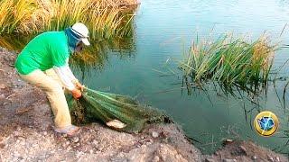 Hombre Pescador Pesca con Red Tilapias Grandes de laguna thumbnail