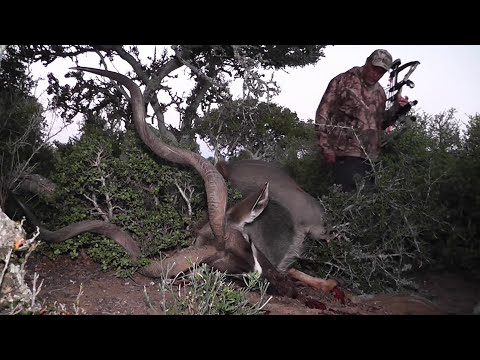 Trophy Kudu Bow Hunt With Koedoes Poort Safaris 2016. A 53