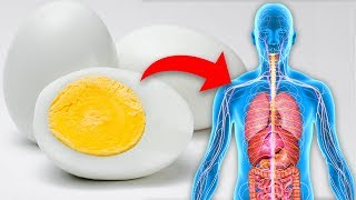Eat 1 Boiled Egg Every Day and This is What Happens To Your Body