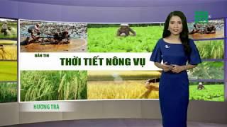 VTC14 | Thời tiết nông vụ 18/06/2018 | Nhiều bệnh gây hại tôm nuôi