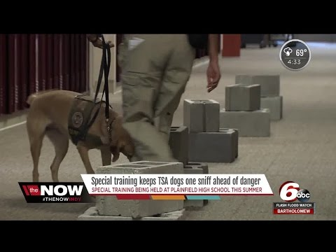 Special training keeps TSA dogs one sniff ahead of danger