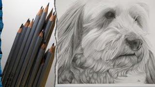 Drawing a Dandie Dinmont Terrier in Graphite Pencil