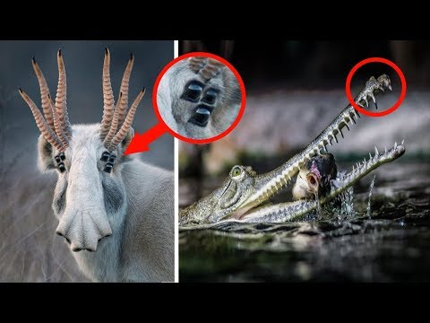 STRANGEST animals you did not know Existed!