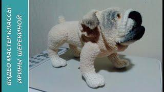 Собака Английский бульдог или Мопс,ч.1.  English Bulldog оr Pug, р.1.  Amigurumi. Crochet.