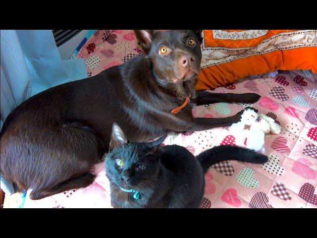 嵐の日の犬と子猫の様子。