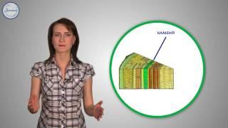 Биология 6 Рост и развитие растений