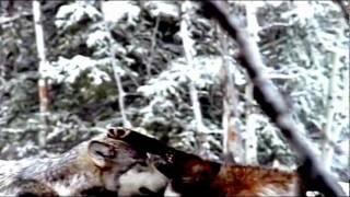 Судьба-зима ღ Г.Лепс.