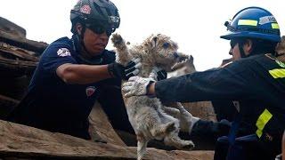 Люди-Герои помогают животным