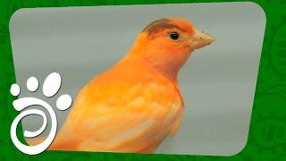 Согреваем Птичек Осенью И Зимой. Все О Домашних Животных