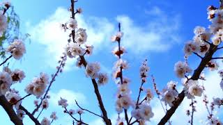 Azərbaycanda Yaz fəsili\\ Azerbaijan spring/ Relax