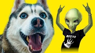 ШТУРМ ЗОНЫ 51!! (Хаски Бандит) Говорящая собака