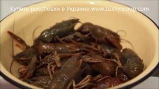 Видео рецепт как приготовить вкусных раков