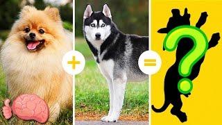 20 Increíbles Cruzas De Razas De Perros Que NO CONOCÍAS thumbnail
