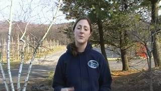 Stony Hill Farm Market CSA Q and A Part 1.MP4